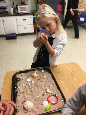 Sensory time exploring shells.